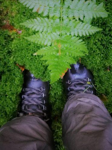 Tietoinen läsnäolo, metsän merkitys. Minun tapani saada aivoille ja ajatuksille uutta virtaa